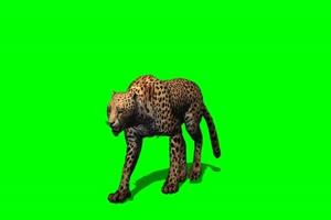 猎豹 2 绿屏抠像 特效素材 免费下载手机特效图片