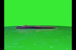 鳄鱼 蛇鱼 水中动物 绿幕
