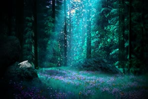 唯美森林 梦幻森林 仙境 背景视频下载28手机特效图片