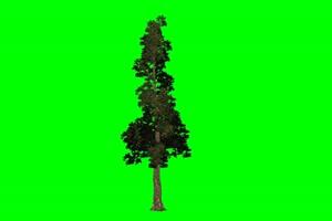 树木 树苗 绿幕视频免费下载 1手机特效图片