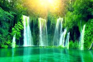 唯美森林 梦幻森林 仙境 背景视频下载26手机特效图片