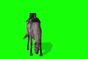白色战马 特效牛 绿幕素材 抠像视频 后期特效素手机特效图片