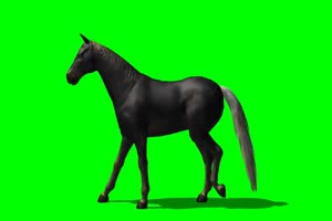 黑马 1 绿屏抠像 特效素材 免费下载手机特效图片