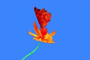 蝴蝶 2绿幕视频素材 动物绿幕 剪映特效素材 特效手机特效图片