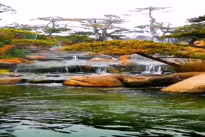 免费手机专用 唯美鱼塘 池塘 美景视频素材43手机特效图片