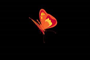 蝴蝶 带Alpha透明通道 抠像