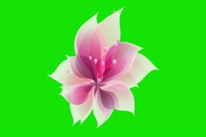 花开  绿屏抠像素材 下载绿布和绿幕视频抠像素材