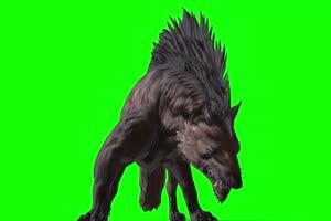 大黑狼 特效牛 绿幕素材 抠像视频 后期特效素材手机特效图片