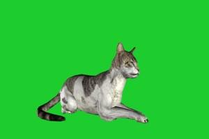 猫 动物绿幕视频素材下载 @特效牛绿幕素材网手机特效图片