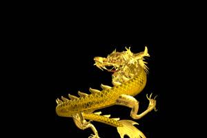 中国龙 金龙飞舞  3 透明通绿布和绿幕视频抠像素材