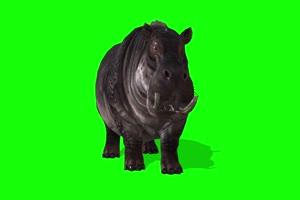 河马 特效牛 绿幕素材 抠像视频 后期特效素材手机特效图片