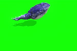 蓝色蟾蜍癞蛤蟆侧面癞蛤蟆 绿幕背景视频 抠像特手机特效图片