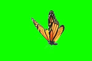 蝴蝶 18 绿屏抠像 巧影AE 特效素材 电影精灵[Tex