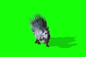 白色的刺猬 特效牛 绿幕素材 抠像视频 后期特效手机特效图片