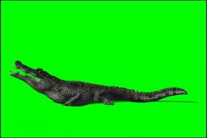 鳄鱼 2 绿屏抠像 特效素材 免费下载手机特效图片