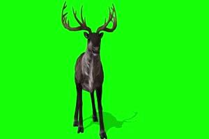 百慕大三角 特效牛 绿幕素材 抠像视频 后期特效手机特效图片