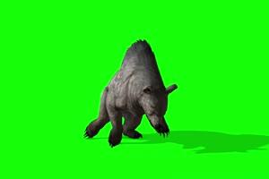 比熊1 动物绿屏 绿幕视频