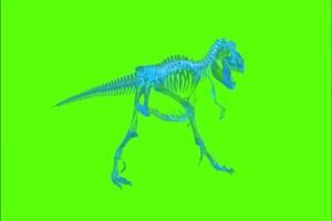 霸王龙骨骼灵魂恐龙绿幕视频素材 剪映AE抠像特手机特效图片