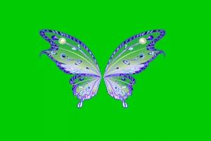 蝴蝶 4 绿屏抠像 巧影AE 特效素材 电影精灵[Texi