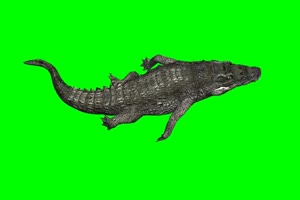 鳄鱼 8 绿屏抠像 特效素材绿布和绿幕视频抠像素材