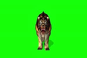 老虎1 动物绿屏 绿幕视频