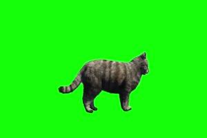猫 绿屏动物 免费下载绿布和绿幕视频抠像素材