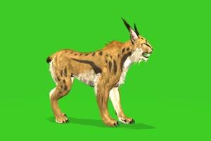 无尾豹 绿屏动物 特效视频 抠像视频 巧影ae素材手机特效图片