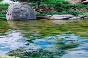 免费手机专用 唯美鱼塘 池塘 美景视频素材48手机特效图片