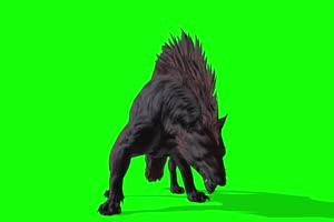 狼 特效牛 绿幕素材 抠像视频 后期特效素材 @特手机特效图片