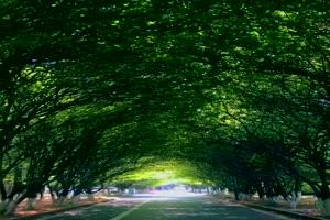 手机专用 公路 林荫  唯美风景视频背景素材 免费手机特效图片
