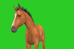 绿幕抠像棕色的骏马绿屏绿布和绿幕视频抠像素材
