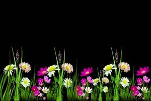 鲜花相框 花草素材 花瓣落叶 51 抠像素材 巧影素手机特效图片