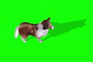 4K 狗上面 绿幕素材 绿幕视频 动物绿幕手机特效图片