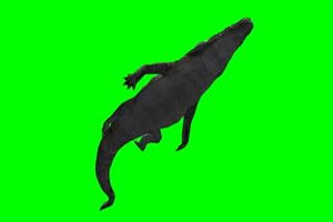 鳄鱼 9 绿屏抠像 特效素材绿布和绿幕视频抠像素材