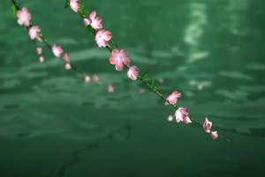 72水墨 江南 国画 古风 唯美 视频背景素材免费下手机特效图片