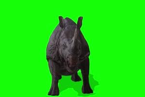 犀牛 特效牛 绿幕素材 抠像视频 后期特效素材手机特效图片