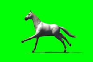 阿拉伯 白马 3 绿屏抠像 特效素材 免费下载