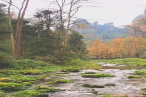 手机专用 森林池塘 美景视频素材60手机特效图片