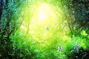 唯美森林 梦幻森林 仙境 背景视频下载39手机特效图片
