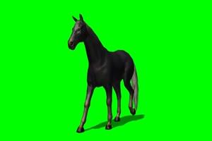 黑马 2 绿屏抠像 特效素材 免费下载手机特效图片