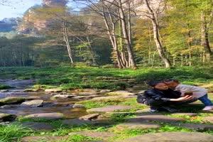 手机专用 森林池塘 美景视频素材61手机特效图片