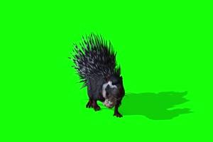 豪猪1 动物绿屏 绿幕视频 抠像素材下载手机特效图片