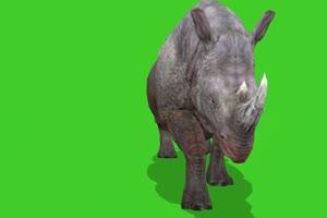 奔跑的犀牛 绿屏动物 特效视频 抠像视频 巧影手机特效图片