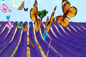 蝴蝶 10 绿屏抠像 巧影AE 特效素材 电影精灵[Tex