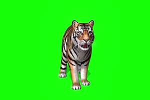 老虎宝宝 特效牛 绿幕素材 抠像视频 后期特效素手机特效图片