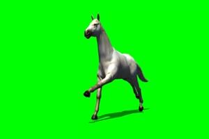 阿拉伯 白马 4 绿屏抠像