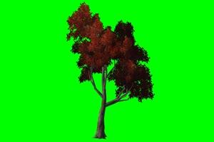 免费 树 风景树 绿布绿屏绿幕视频素材免费下载手机特效图片