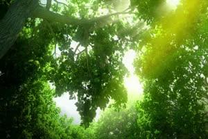 唯美森林 梦幻森林 仙境 背景视频下载38手机特效图片