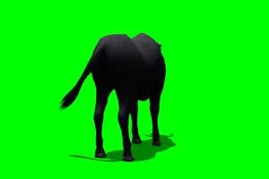 公牛 黑牛 2 绿屏抠像 特效素材 免费下载手机特效图片