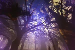 唯美森林 梦幻森林 仙境 背景视频下载30手机特效图片